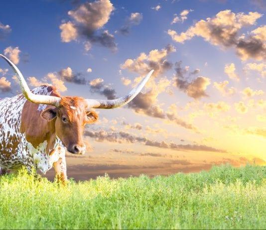 Austin texas Best Neighborhoods