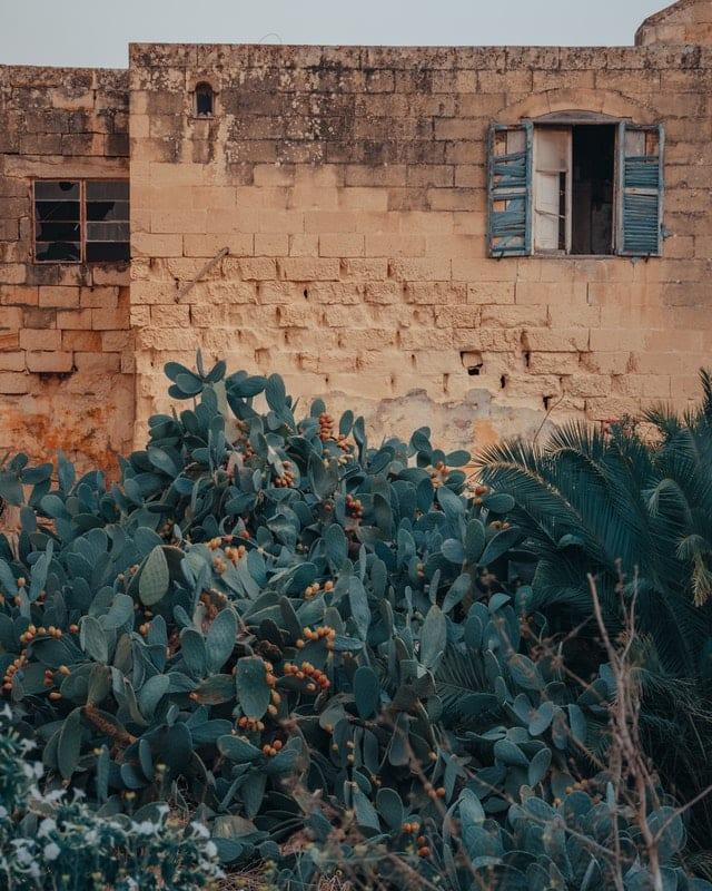 brick house behind desert bushes