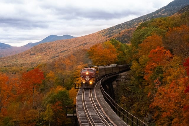 Train going through a forest